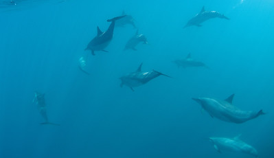 DOLPHIN POD COLOR