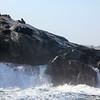 Cape Fur Seals - Luderitz, Namibia to Halifax Island via Zeepard catamaran excursion