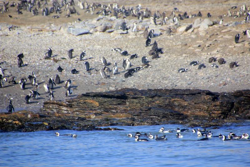 Luderitz, Namibia to Halifax Island via Zeepard catamaran excursion