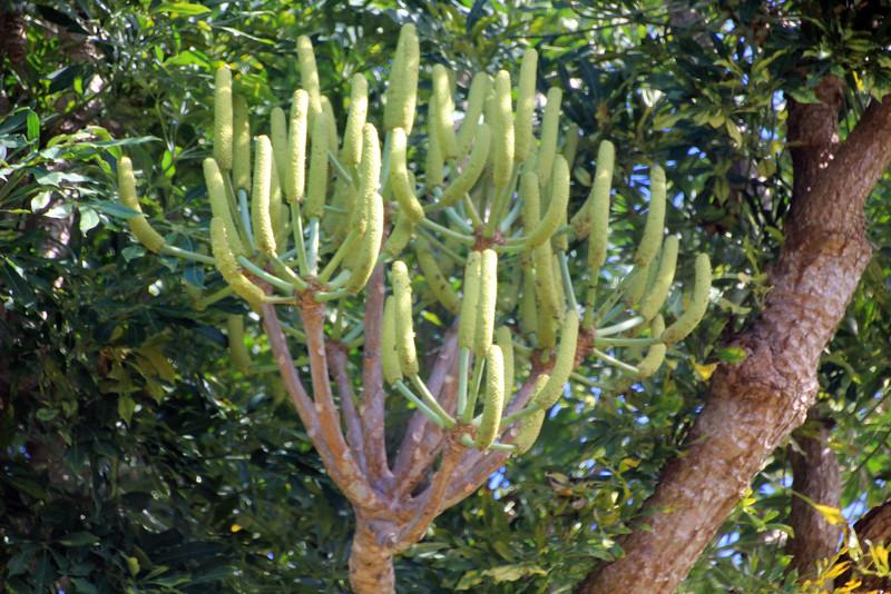 Kirstenbosch Gardens - Cape Town, South Africa