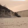 Black back jackals - Walvis Bay, Namibia