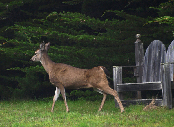Deer with Bench