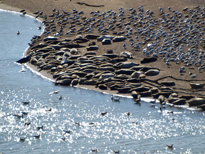 Seals and birds