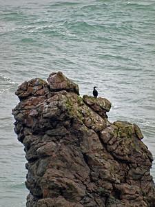 Bird watching at the ocean