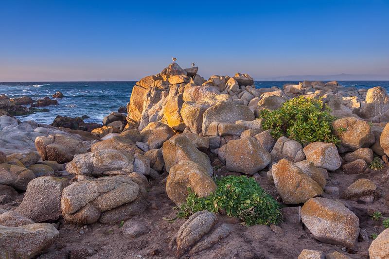 Pacific Grove Rocky Shore 5