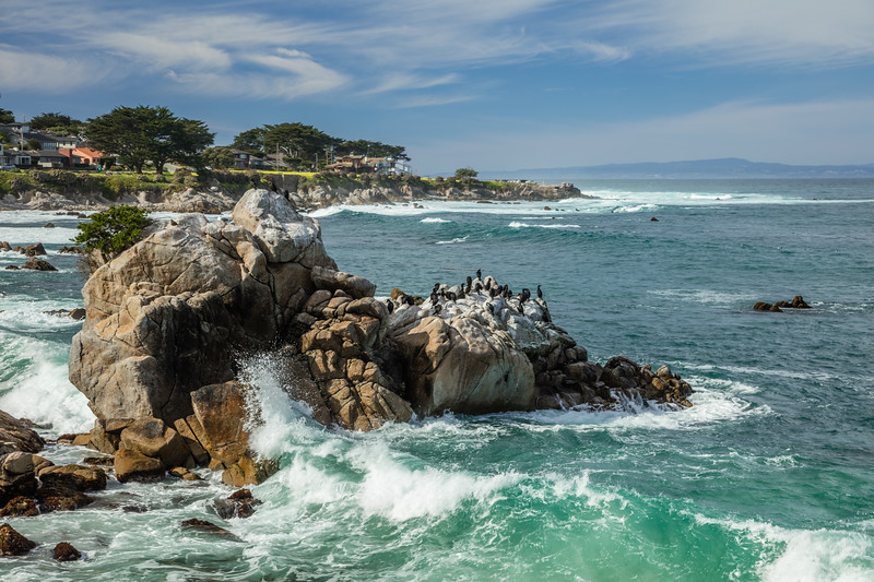 Pacific Grove Wave on Rock