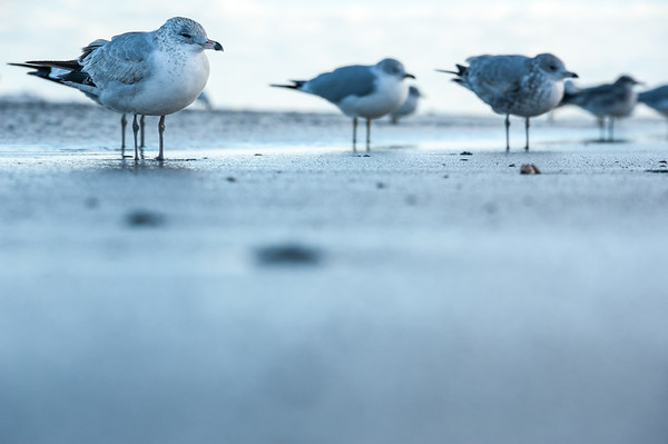 Seagulls on the Shore.