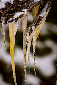 Icicles on Tree Roots