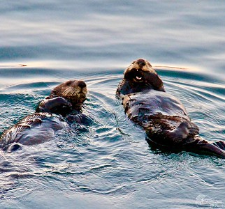 Sea Otter Lunchtime