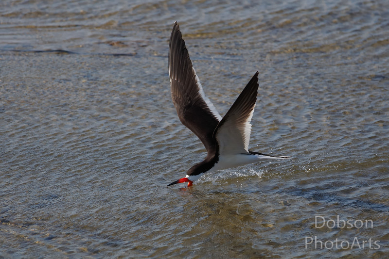 Skimming the Shallows