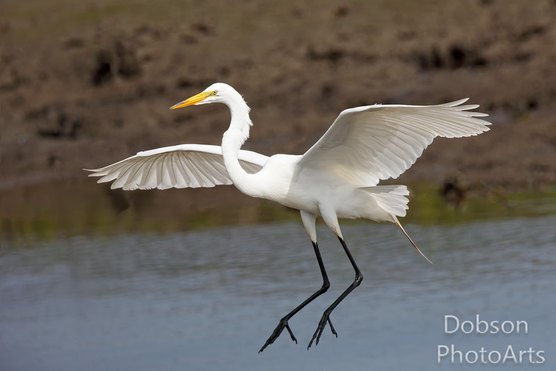 White Egret and a Ten Point Landing