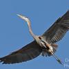 Wingspan II