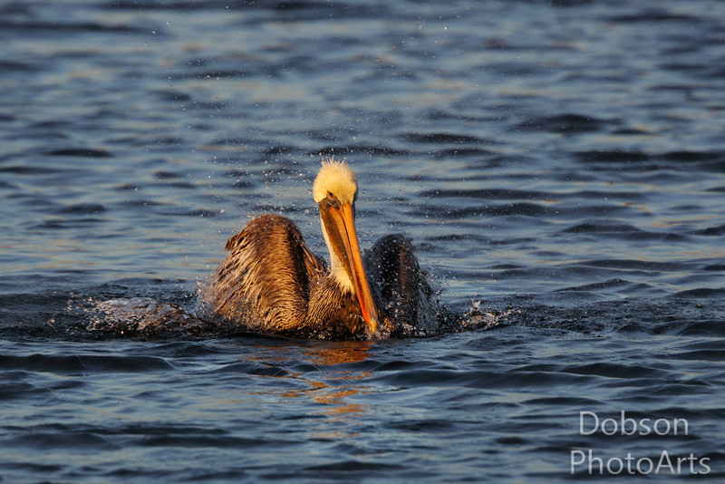 Bath time - pelican style