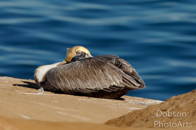 I think someone stole my beak