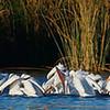 White Pelican Banquet
