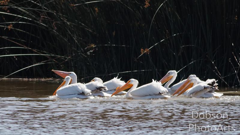 Team Pelican cruising for a bruising....