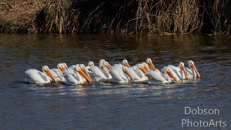 Synchronized floating