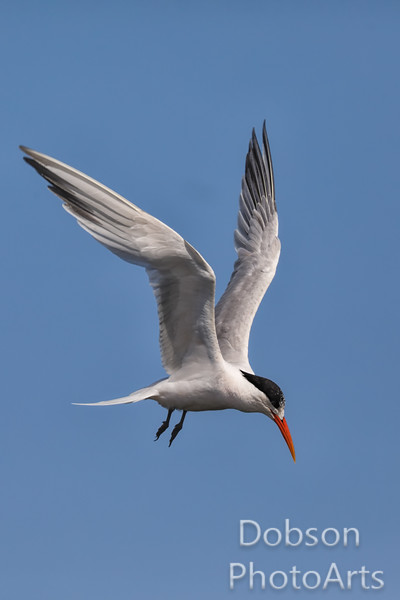 A Tern's Time to Turn