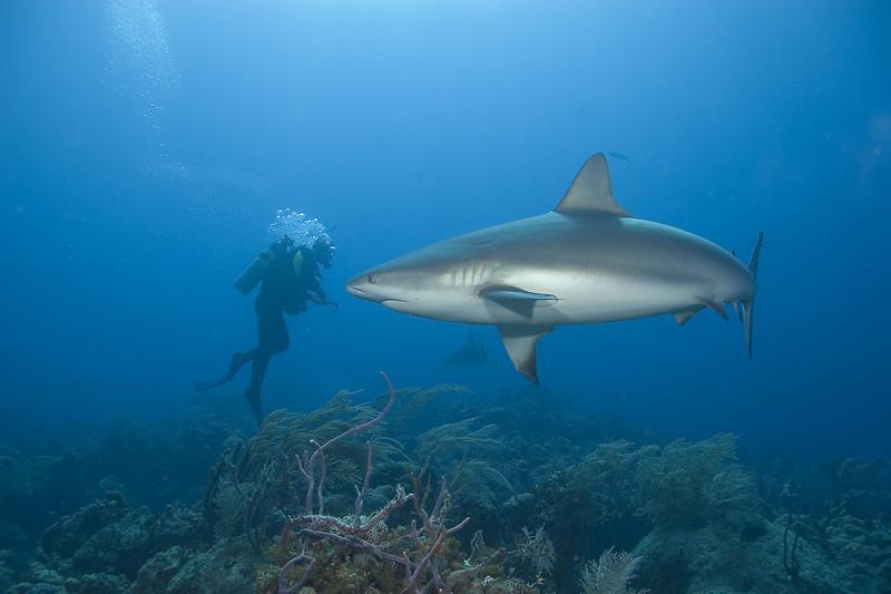 Big Fish Little Diver