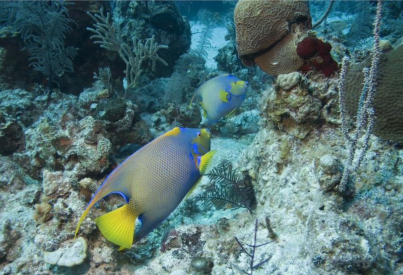 Reef Fantasy