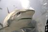 IMG_8954 Ferocious Shark