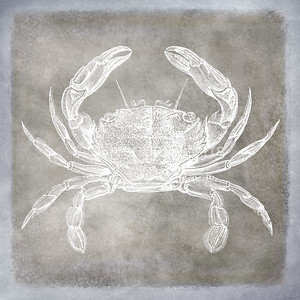 Vintage Crab Sea Life Pewter and Blue Watercolor