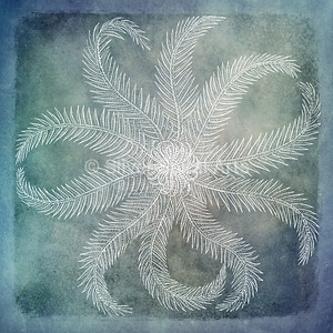 Sea Star II - Coastal Watercolor in Blue and White with 1800s Rosy Feathered Starfish Illustration