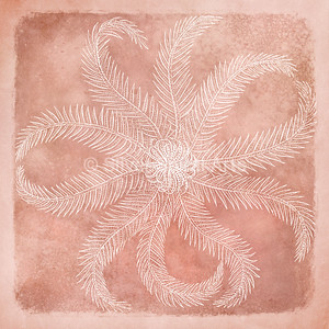 Sea Star II - Coastal Watercolor in Coral and White with 1800s Rosy Feathered Starfish Illustration