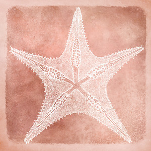 Sea Star III - Coastal Watercolor in Coral and White with 1800s Sea Star Starfish Illustration