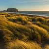 Coastal Grass - Goat Rock Beach