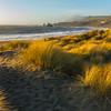 Sand Dunes - Goat Rock Beach