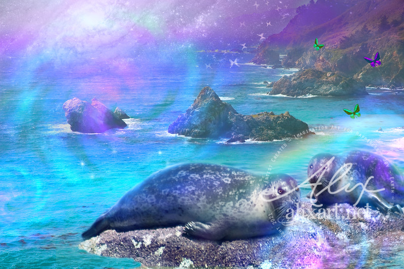 California Sealion Enchanted