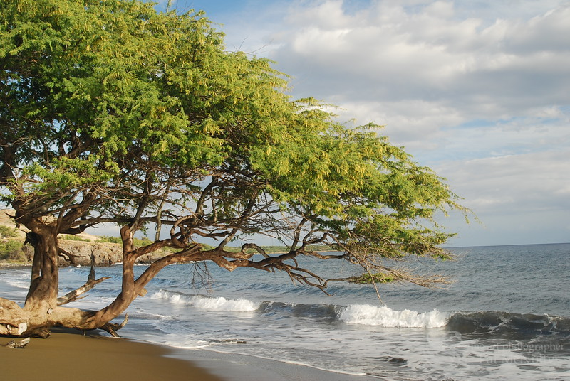 Tree on Beach Picture