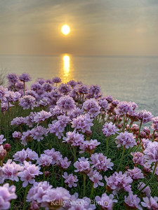 Floral Sunset in Cornwall, UK