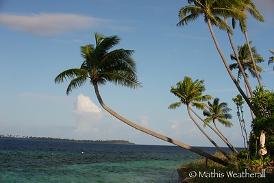 Palm Trees Over Water in Wakatobi