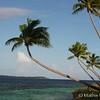 Palm Trees Over Water in Wakatobi