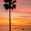 Colorful Sunset with Palm Tree at Heisler Park