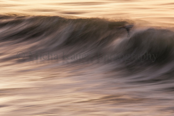 Man in Wave