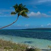 Palm Tree Over Water at Wakatobi