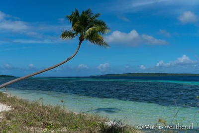 Palm Tree Over Water at Wakatobi
