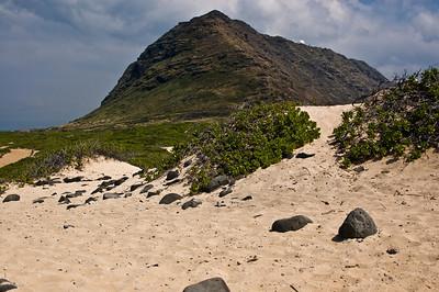 Kaena Point Leeward Oahu