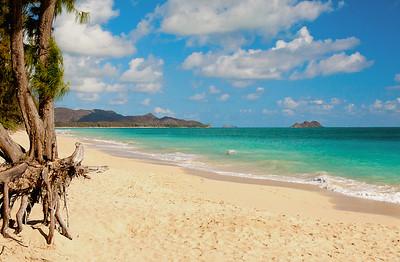 "Trees walking to the sea along Waimanalo Beach Looking north is the Mokapu Peninsula and the Mokulua ""Moks"" Islands   O'ahu, Hawaii"
