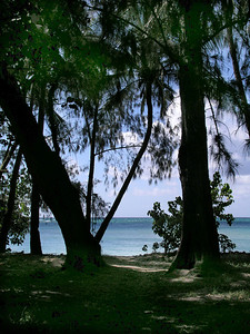 The beach at Kawela Bay appears after a short walk through the Banyan Tree forest 030901