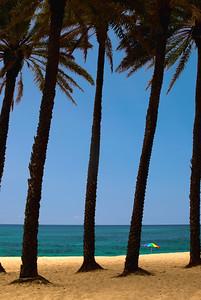 Sunset Beach Palm trees in a row North Shore, O'ahu, Hawai'i