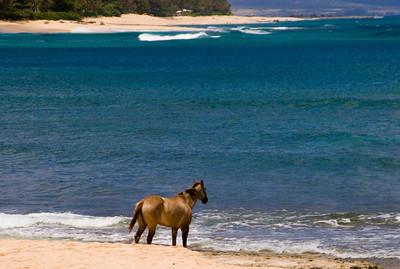 Sunset BeachHorse on the beachNorth Shore, O'ahu, Hawai'i
