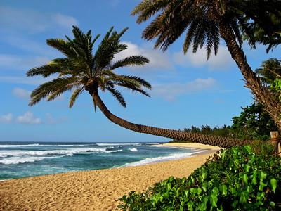 Sunset Beach Iconic Palm at North Shore, O'ahu, Hawai'i