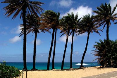 Sunset BeachCoconut palm trees on the beach along the bike path   North Shore, Oahu, Hawaii