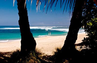 Sunset Beach  Through coconut palm trees,North Shore of O'ahu