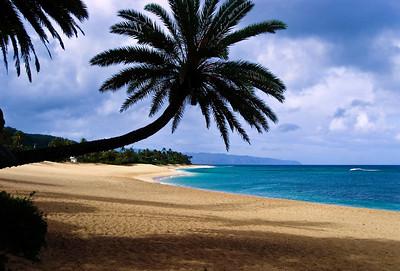 Sunset BeachFamous coconut palm tree leans over the sandNorth Shore, O'ahu, Hawai'i