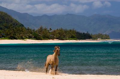 Sunset BeachHorse running on the beachNorth Shore, O'ahu, Hawai'i